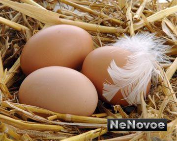 закупаем оптом яйцо куриное