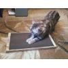 Новое поколение когтеточек-лежанок для кошек в Вологде.